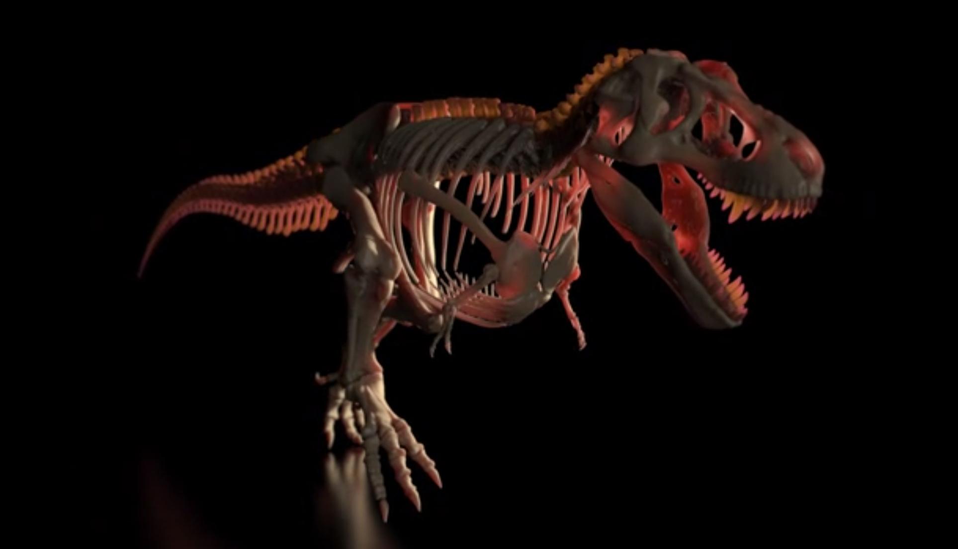侏罗纪恐龙骨骼扫光keyshot动画